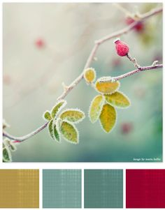 soft color palette with a punch of pink! by terrie Colour Schemes, Color Combos, Color Palate, Design Seeds, Colour Board, Color Stories, Color Swatches, Color Theory, House Colors