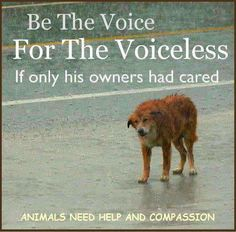 Be the voice for the voiceless ~ please rescue dogs in the street (carefully as they may be frightened and bite. If u don't know how, ask someone around u for help. I have a leash specially made that I keep in my Jeep so that I can throw it around a dogs neck without making contact with the animal. I once got bitten years ago but thank God the dog was up to date on rabies shots. -Mari.  Repin.