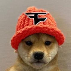 Faze Clan Dogwifhat | Dogwifhat | Know Your Meme