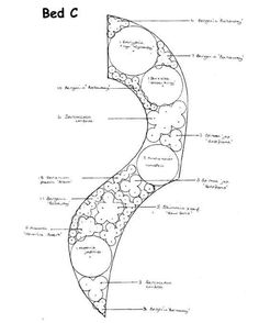 shady shrub border planting plan detailed presentation plan of a