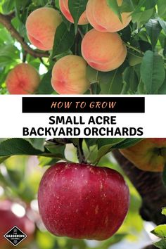 Organic Gardening Learn how to set up and plant your own small orchard. Harvest your own apples, sweet cherries, pears, peaches and plums. Organic Vegetables, Growing Vegetables, Pot Jardin, Organic Gardening Tips, Vegetable Gardening, Sustainable Gardening, Organic Farming, Natural Garden, Garden Pests