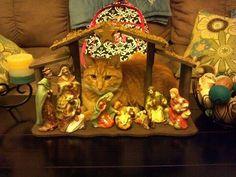 37 Cats Crashing Nativity Scenes