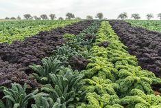 Greenwayfood – Originální recepty Petra Klímy Petra, Plants, Flora, Plant