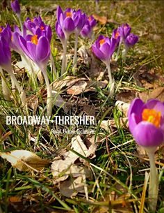 Crocus always remind me of my Nana. She bought bulbs for my first house and told me they would be the first sign of spring!  I always think of her when I see these flowers in my yard.