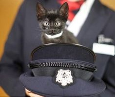 """Mews and Nips: British Airways Introduces """"Paws and Relax"""" - The Conscious Cat"""