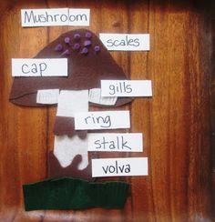 Parts of a Mushroom II: Felt Mushroom Puzzle - The Indigo Teacher