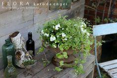 フローラのガーデニング・園芸作業日記-ベゴニア ユーフォルビア 寄せ植え