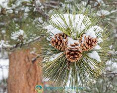 Wildlife Nature, Rocky Mountain National Park, Rocky Mountains, Dandelion, Nature Photography, National Parks, Landscape, Flowers, Plants