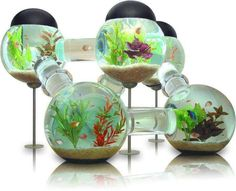 Awesome Fish Tank!