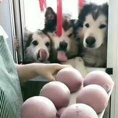 Cute Animal Videos, Cute Animal Pictures, Funny Animal Photos, Animal Jokes, Funny Animal Memes, Cute Little Animals, Cute Funny Animals, Funny Dog Videos, Funny Dogs