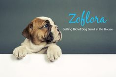 Zoflora: Getting Rid of Dog Smell in the House