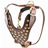 The Stud Brother Leather Dog Harness with solid brass studs is for large dogs over 50 lbs. Bully breeds look especially handsome in this handmade dog harness. Leather Harness, Dog Harness, Collar And Leash, Pet Collars, Studded Leather, Brown Leather, Leather Tooling Patterns, Large Dog Breeds, Large Dogs