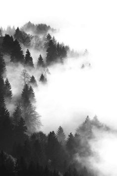 Black and White nature forest mist Woods fog foggy pines bleak