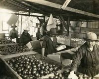 Washington State Historical Society - agricultural workers (one man and four women) are shown packing apples into boxes from large sorting tables on the Asahel Curtis Ranch and orchard, near Grandview