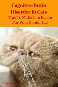 Tips to look for with cognitive brain disorder in cats & ways to help your cat cope #cathealth #cats