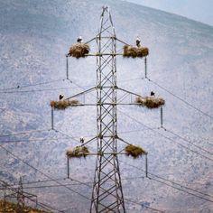 Vultures near Ranya, Sulaymaniyah, Kurdistan Region, Iraq
