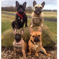The pack❤️ by fourlittlefrenchies http://ift.tt/19nTi06