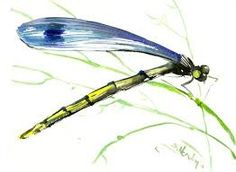 Image result for watercolour paintings - insects