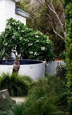 A stylish Sydney landscape featuring an Australian Plunge pool nicely nestled in . Backyard Pool Landscaping, Modern Landscaping, Backyard Landscaping, Pool Fence, Landscaping Ideas, Backyard Ideas, Garden Ideas, Natural Swimming Pools, Swimming Ponds