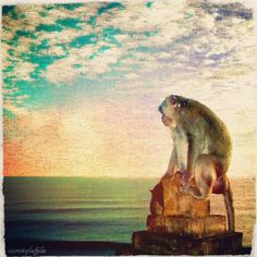 Travel with me: a Balinese monkey dreaming of Hawaii.     - Please follow @iamstylefile- #webstagram