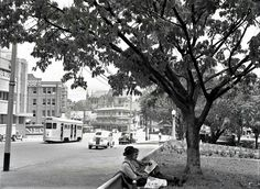 Ann Street from Centenary Place, Petrie Bight, 1950 Brisbane Cbd, Historical Photos, Ancestry, Old Photos, 1950s, The Past, Street View, Australia, History