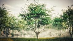 The Secrets to Creating Realistic Trees
