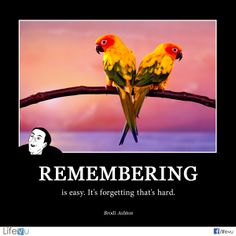 """Remembering is easy. It's forgetting that's hard."" ― Brodi Ashton  #funny #memory #quotes #funeral #funeralhome  ‪"