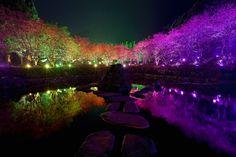 Se você pensa em visitar Taiwan, deveria escolher o mês de fevereiro, de modo que possa testemunhar a visão incrível mostrada neste post. Realizado anualmente desde 2001, o Festival da Flor de Cerejeira Aborígene reúne um grande número de visitant...
