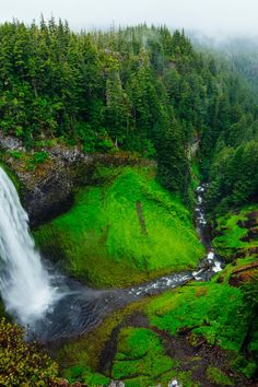 nature, forest, trees, waterfall into a stream