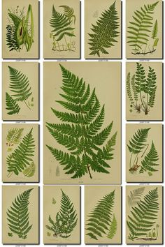 LEAVES GRASS Collection-1 of 248 vintage images vegetable botanical High resolution digital download printable herbarium flowers ferns dpi on Etsy, $3.99