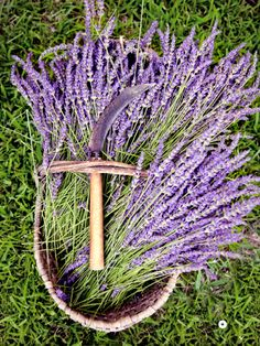 """I saw this in """"Lavender Fields Forever"""" in Martha Stewart Living July August 2014."""