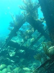Snorkel Bermuda-- to snorkel shipwrecks