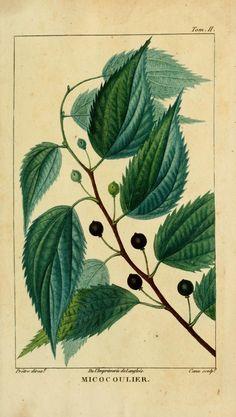 t.2 (1826) - Histoire naturelle des principales productions de l'Europe méridionale et particulièrement de celles des environs de Nice et des Alpes Maritimes / - Biodiversity Heritage Library