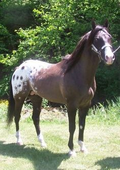 Dial A Challenge - Stallion Directory