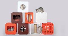 ArniSays Kitty Kasa Collection