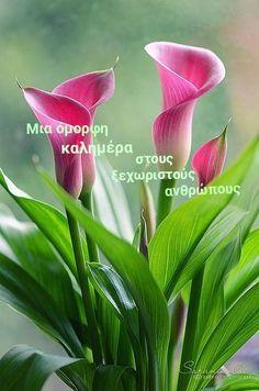 Unusual Flowers, Most Beautiful Flowers, Pretty Flowers, Black Flowers, Diy Flowers, Calla Lily Flowers, Calla Lillies, Lilly Flower, Flower Images