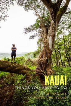 Follow this guide for Hawaii's forgotten island Kauai for the top 10 things you should do there. Kauai Vacation, Hawaii Honeymoon, Kauai Hawaii, Vacation Destinations, Vacation Trips, Vacations, Poipu Kauai, Hawaii Wedding, Italy Vacation