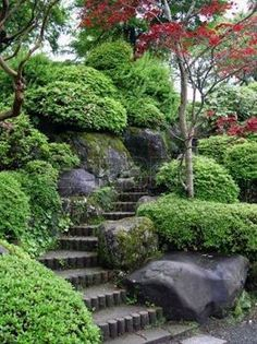 japanese maples: Japaneese garden with stairs and red maple tree