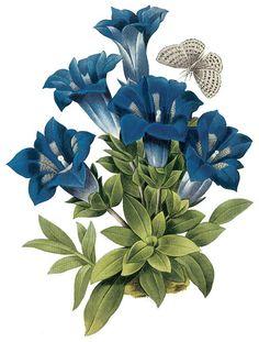 Antiqued Vintage Blue Flower...blue, spotted white and black