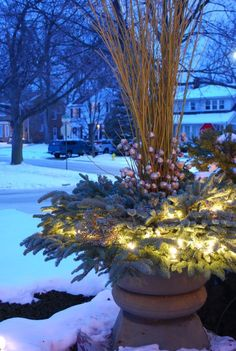 The yellow twig in the pots is a pale color, but it does not read well at night. The lights in the evergreens helps light them considerably...