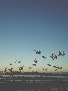 Take flight | finchandfawn.com
