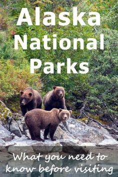 A complete (and long!) concise guide about all 10 Alaska national parks. Which can you visit, when can you get there and how. Some of these parks are incredibly remote and inaccessible so read this before planning your Alaska trip! Alaska Travel, Travel Usa, Alaska Trip, Travel Tips, Alaska Highway, Hawaii Travel, Travel Ideas, Travel Photos, Alaska National Parks