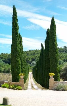Rows of cypress trees, Provence, France. Plant Design, Garden Design, Provence France, Provence Garden, Cypress Trees, French Countryside, French Country Style, South Of France, Outdoor Gardens