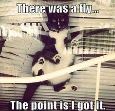 bad cats, funny cats