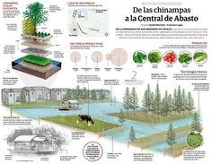 mexico-sistema-cultivo-sustentable-chinampas-que-son Wetland Park, Farm Gardens, Garden Farm, Landscaping Plants, Aquaponics, Irrigation, Growing Plants, Botany, Homesteading