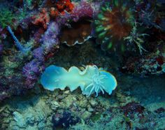 underwater photography - Google Search