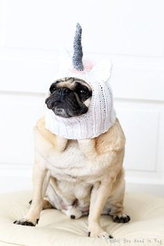 Pugicorn! Click through to get this cute crocheted hat for your pup.