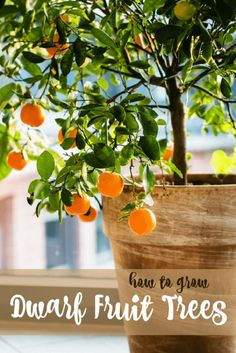 How to Grow Dwarf Fruit Trees