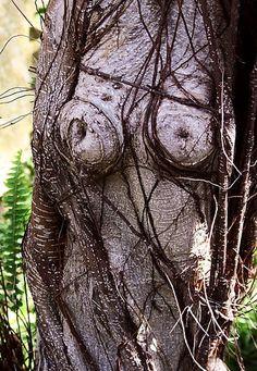 ...tree trunk exposed...