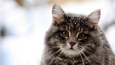 Winter | cat